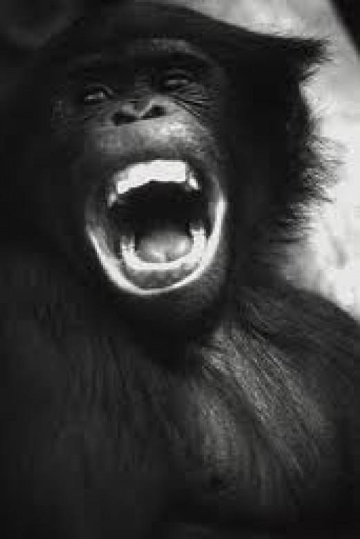Primate smiles