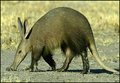 """Aardvark? People will think I'm Scandanavian with a name like that."""