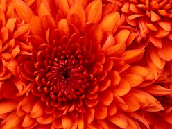 Flowers From Heaven