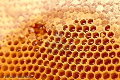Honeycomb with open and closed honey cells