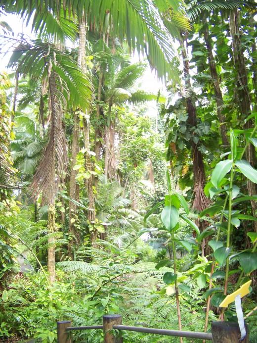 Rain forest trail