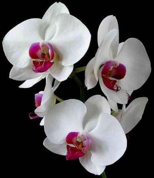 Agavin cvet. - Page 8 4596958_f520