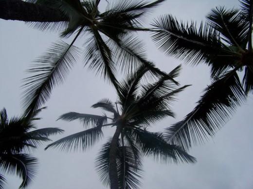 It rains quite often in Hilo area