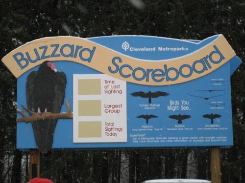 The Official Buzzard Scoreboard