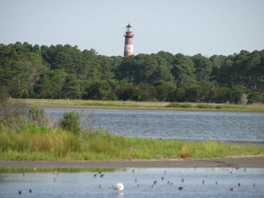 Assateague Lighthouse is viewed on the left of Beach Road on Assateague Island, Virginia, U.S.A.