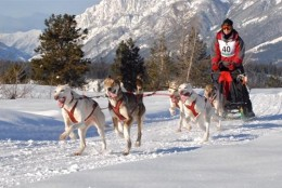 This photo of Bob Fawcett at the February 2011 Bootleg Sled Dog Races is posted on their website