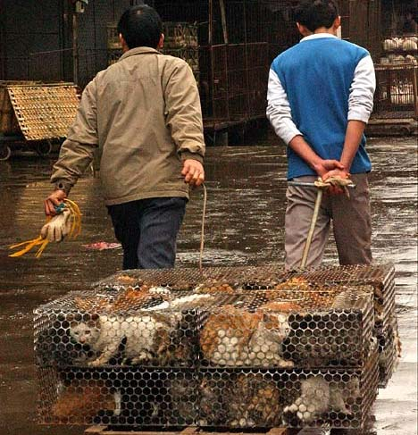 These Cats Will Be Skinned Alive For Their Fur