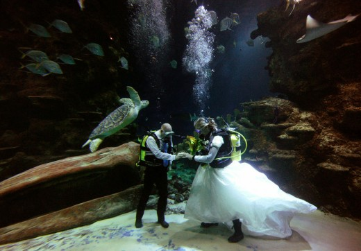 London Aquarium Marriage Ceremony, on February 14, 2011.