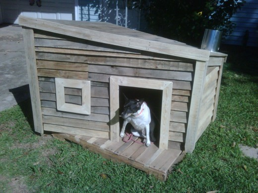 This family pet looks very happy in his recycled wood pallet home!