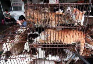 Evidence of China's shocking abuse of animals.
