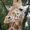 Mel Jay profile image