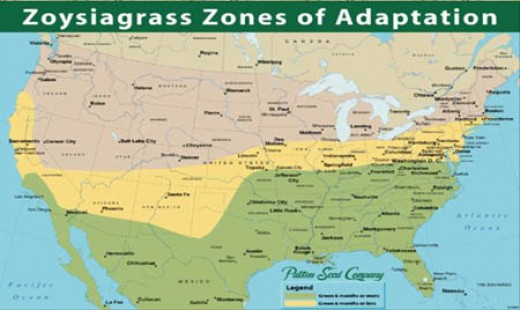 areas of zoysia grass growth