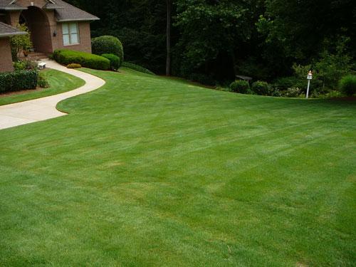 Zoysia grass lawn
