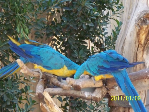 This photo was taken at the wildlife zoo in az.