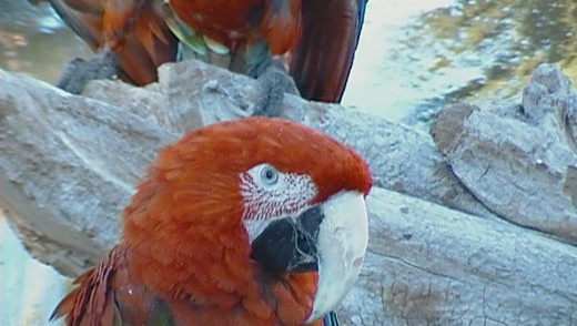 Wild Life Zoo In AZ