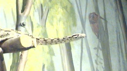Taken at the Wild Life Zoo In AZ