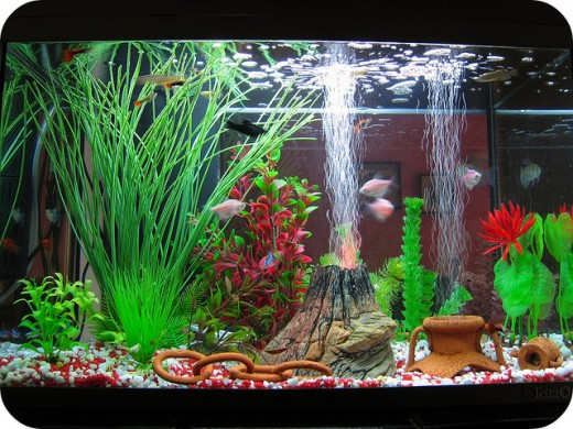 Choosing the best aquarium decorations for your fish for Aquarium decoration pictures