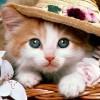 Sneha Sunny profile image