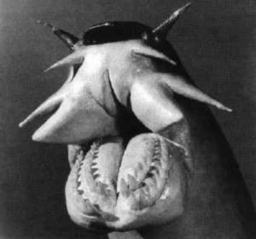 The Hagfish Mouth, Ugly Ass Fish