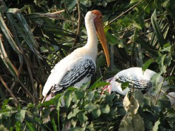 Bird Sanctuaries in Tamil Nadu, India