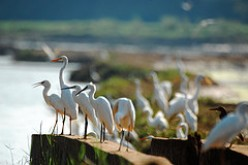 Bird Sanctuaries of Kerala, India