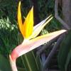 Maui-Dreamer profile image