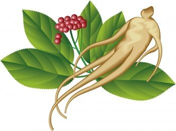 Panax ginseng root can be humanoid shaped