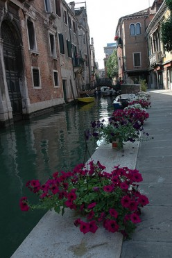 Spring flowers and canals in Venice. Photo by hkxforce (flickr)
