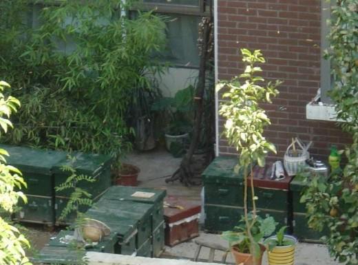 Beekeeping in residential area.