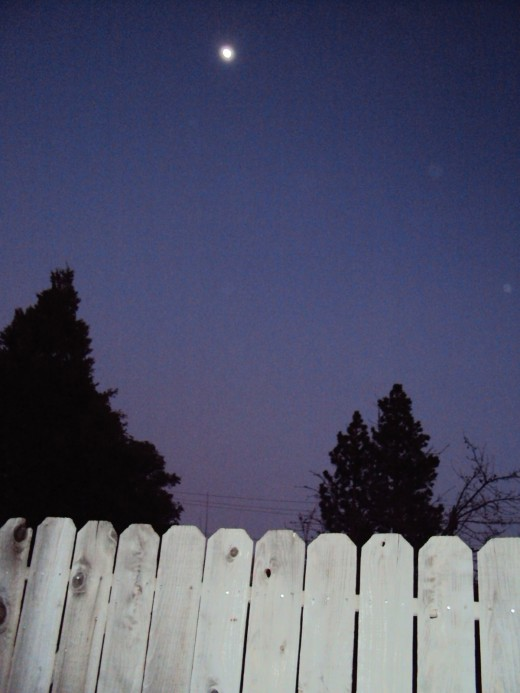 The moon above the trees and fence.