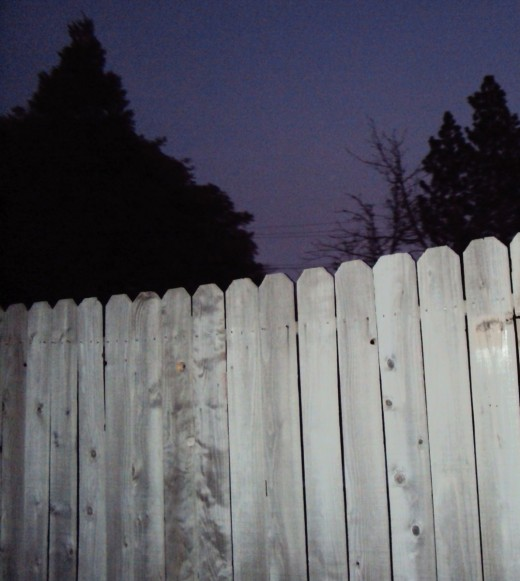 Also, I like how the trees are peeking over the fence in this photograph.