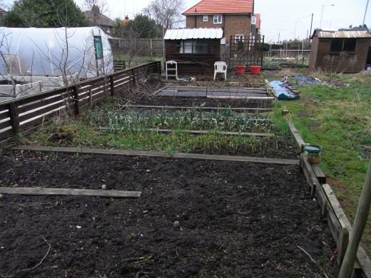 Johnny's allotment half plot in February