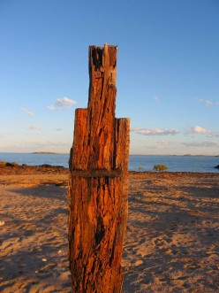 Driftwood as art