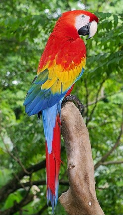 Large Macaw Types
