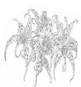 Online Flower Arrangements Coloring Pages and Free Colouring Pictures to Print - Orchids