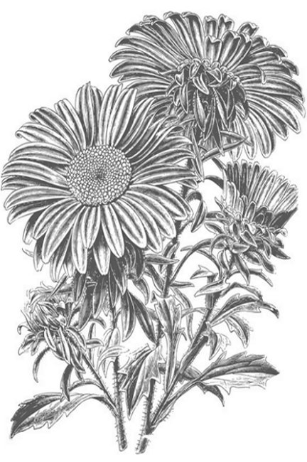 Online Flower Arrangements Coloring Pages and Free Colouring Pictures to Print - Sunflower sans seeds