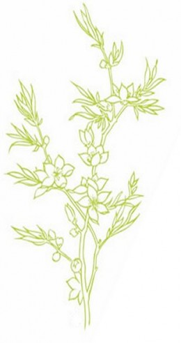 Online Flower Coloring Pages and Free Colouring Pictures to Print - Flowering Herbs