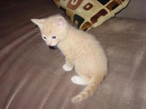 Little sweet BeauBo