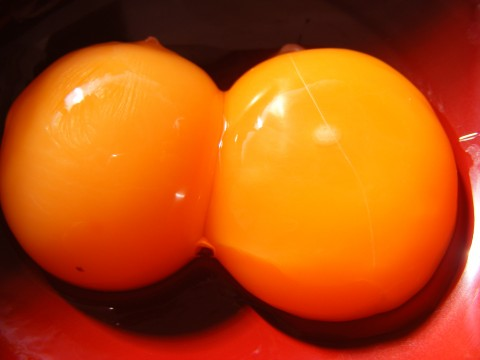 Egg yolk contains, high level of cholesterol