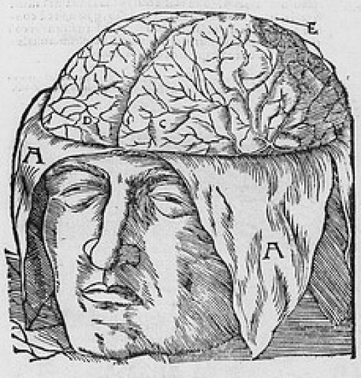 The brain laid bare ...