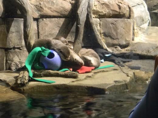 Asian Sea Otters.