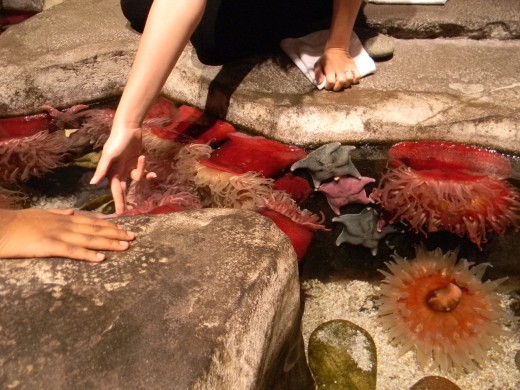 There is a trick to touching the sea anenomes! This guide shows us how!