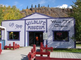 The Wildlife Museum in Carcross