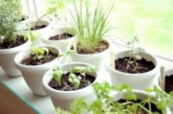 How to Create Your Own Container Herb Garden