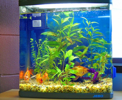 Feng shui decor attracting the good neutralizing the bad for Feng shui fish tank
