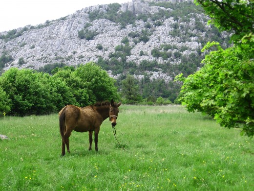 Mountain Velebit, Rujno, CROATIA
