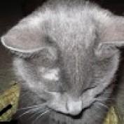 Vala Faye profile image