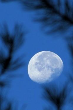 Moons Tears