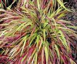 5 Eye Catching Ornamental Grasses