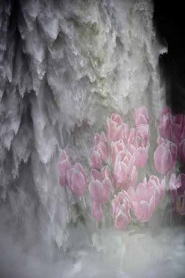 Abstract Waterfall and Tulips Photo